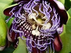 fiori esotici foto fiori esotici 2 foto immagini macro e up macro
