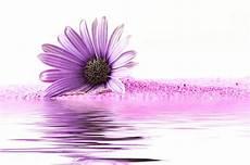 fiori di bach ipertensione contro l innalzamento della pressione usa i fiori amicomed