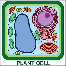 Clip Cells Plant Unlabeled Color I Abcteach