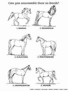 breeds c horses breeds