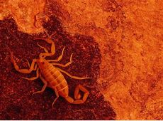 Scorpio Wallpapers   Wallpaper Cave