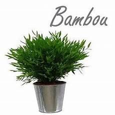 bambou d intérieur bambou d int 233 rieur les poteries d albi