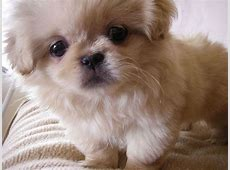 All List Of Different Dogs Breeds: Cute Dog Breeds