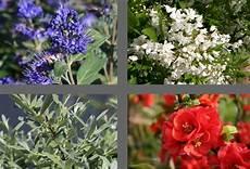 pflanzen für bienen und schmetterlinge bienen n 228 hrgeh 246 lz sortiment aus 4 pflanzen unterst 252 tzung