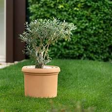 vasi per piante da esterno prezzi vaso classico in resina da esterno vicenza by bestprato