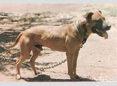 Ripoff Report   American Pit Bull Terriers, Game Bred Pits