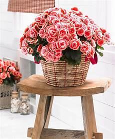 prezzo fiori fiori da interno ecco alcune variet 224 perfette per l