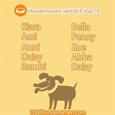 hundenamen weiblich top 10 hundenamen