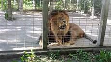 am zoo elmvale jungle zoo