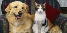 les pr 233 noms des chats et des chiens 2016 commencent par la