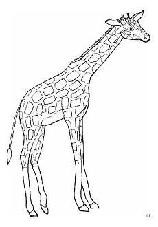 giraffe 5 ausmalbild malvorlage tiere