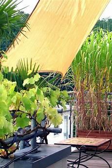Sichtschutz Auf Dem Balkon Durch Pflanzen Ndr De