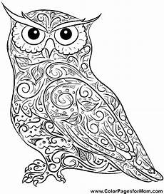 Kostenlose Malvorlagen Eule Baby Owl Coloring Pages At Getcolorings Free