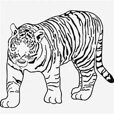 Tiger Malvorlagen Zum Ausdrucken Kostenlos Tiger Malvorlagen