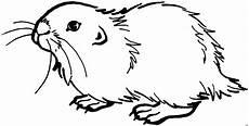meerschweinchen suess ausmalbild malvorlage tiere