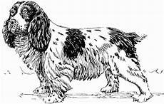 Ausmalbilder Hunde Cocker Spaniel Malvorlage Hund Spaniel Kostenlose Ausmalbilder Zum