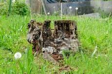 Baumstumpf Im Garten Verschönern - baumwurzeln absterben lassen 187 so beschleunigen sie den