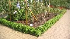 pflanze mit i walderdbeeren als beeteinfassung gefilmt in wisely