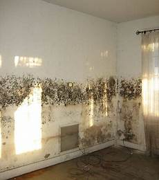 Tips For Getting Rid Of D And Mould Never Paint Again