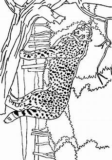 gepard ausmalbilder ausmalbilder f 252 r kinder
