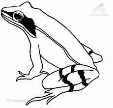Malvorlage Frosch Oben Bewertung Malvorlage 1 2 3 4 5 Beschreibung Malvorlage
