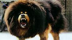 10 Of The Largest Breeds In The World