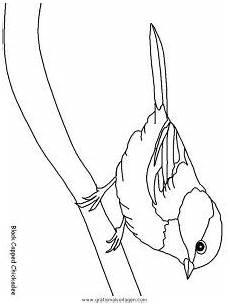verschiedene vogel 180 gratis malvorlage in tiere v 246 gel