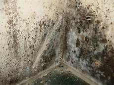 Mold Removal Services Yuma Yuma Remove Toxic Black Mold