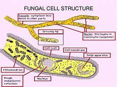 diagram of fungus hair henna hair yeast