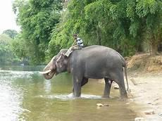 Malvorlage Indischer Elefant Indischer Elefant Der Indische Elefant Auch Asiatischer