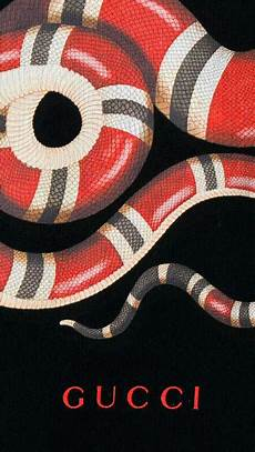 gucci wallpaper hd iphone 96 gucci snake wallpaper on wallpapersafari