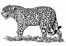 ausmalbild jaguar tier gratis ягуар леопард гепард