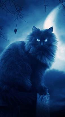 Black Cat Wallpaper Iphone 30 best cool iphone 6 hd wallpapers backgrounds