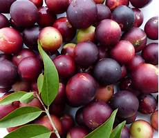 the impressive health benefits of camu camu befantastico