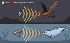 Indera Pendengaran Dan Sistem Sonar Pada Makhluk Hidup
