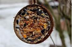 diy vogelfutter ganz einfach in einer kokosnussschale