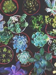 aesthetic cactus iphone wallpaper succulent palette jungalowjungalow