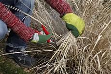 wann gräser schneiden pr 228 riegarten pflegetipps mein sch 246 ner garten