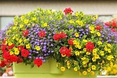 sonne oder halbschatten tipps zum standort plant happy 174