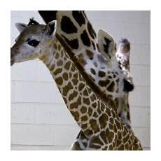 animal worksheets 13940 cheyenne mountain zoo visit colorado springs
