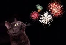 tips for helping your cat through the fireworks season