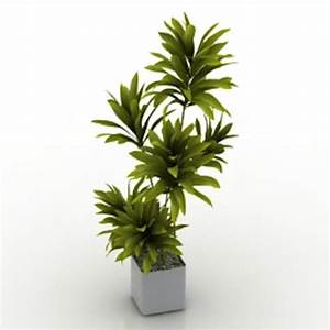 House plant 3d model free 3d models for House plants for free