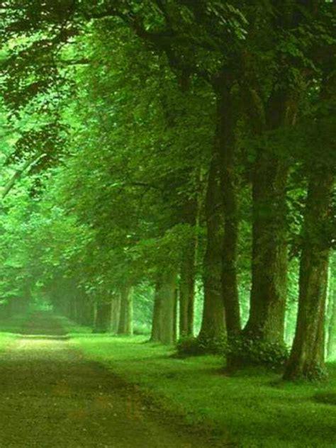 fondo escritorio paisaje camino verde