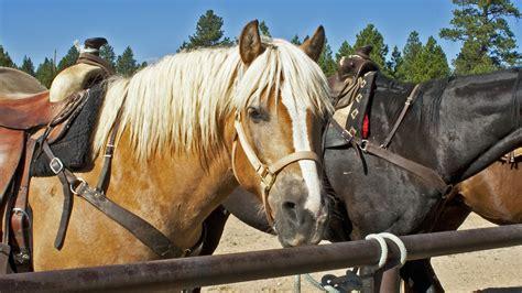 heterotroph examples horse example herbivorous heterotrophs