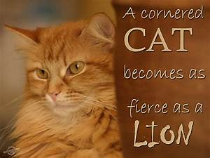 A cornered cat becomes as fierce as a lion
