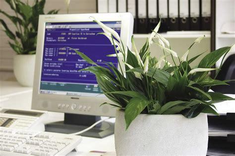 Pflanzen Gegen Staub by Airy Box Luftreiniger Blumentopf F 252 R Allergiker
