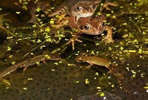 Newts, Among, Frogspawn