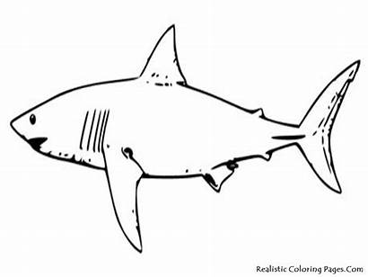 Coloring Pages Fish Tropical Shark Printable Sea