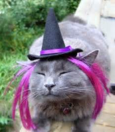 Cat with Witches Hat