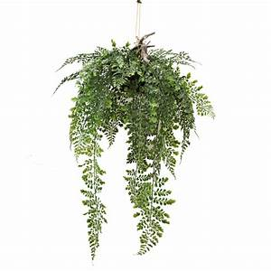 HANGING FERN 70CM COMPLETE WITH BASKET Greenery Imports